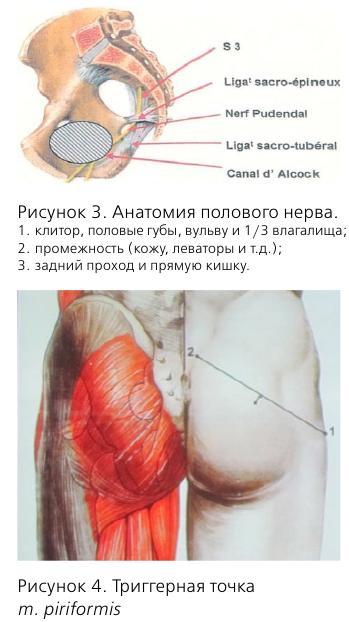Нейропатия полового нерва
